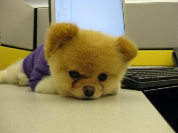 Boo The World S Cutest Dog Lunch Box